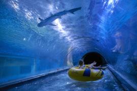 Atrakcje nad morzem na niepogodę aquapark reda rekiny ceny opinie