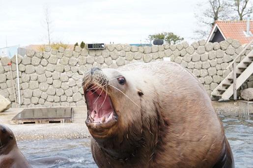 Delfinarium Harderwijk Holandia opinie atrakcje pokazy