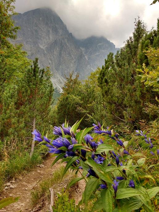 Dolina Pięciu Stawów na weekend z dziećmi opinie szlaki
