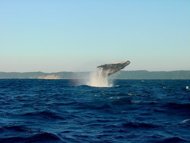 Islandia z dzieckiem najlepsze atrakcje gdzie jechac z dzieckiem co zobaczyc Akureyri husavik wieloryby rejsy