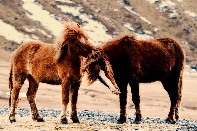 Islandia z dzieckiem najlepsze atrakcje gdzie jechac z dzieckiem co zobaczyc konie kuce gdzie na islandii