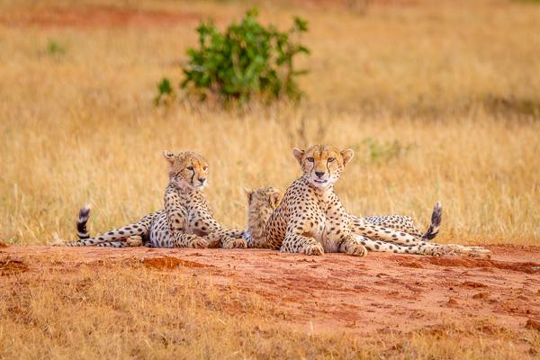 Kenia Safari opinie z dzieckiem