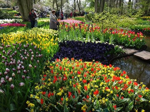 Keukenhof Park Holandia opinie ceny parada