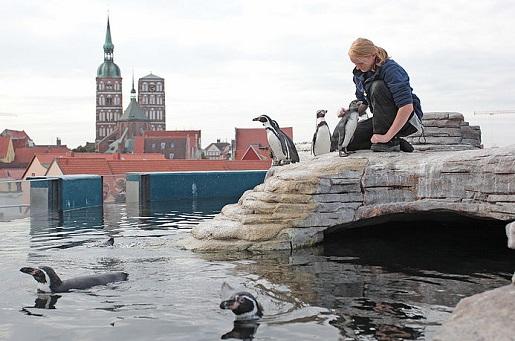 niemcy atrakcje dla dzieci Oceanarium Stralsund karmienie pingwinów opinie