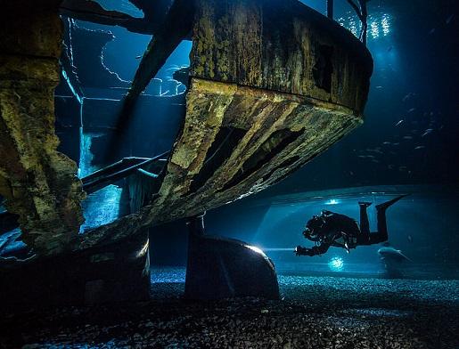 Niemcy Oceanarium Stralsund czy warto rodzinne atrakcje opinie