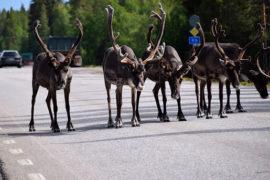 Nordkapp Wyspy Alandzkie Szwecja Finlandia co zobaczyć na Północy atrakcje skandynawii północy renifery