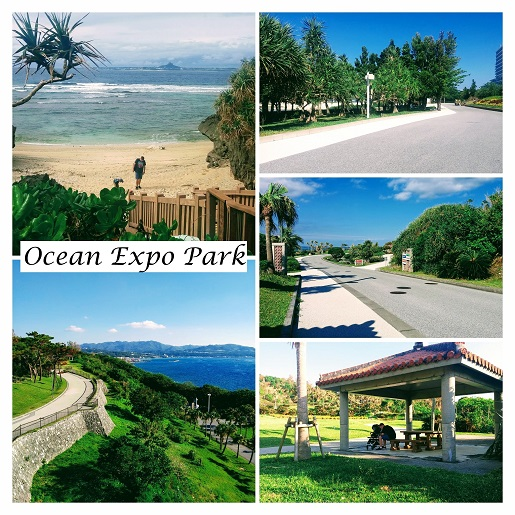 Ocean Expo Park Okinawa Japonia atrakcje