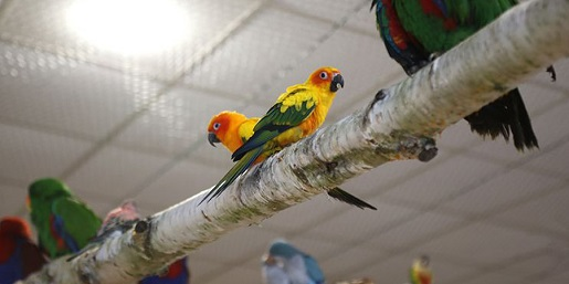 Papugarnia-bydgoszcz-atrakcje-weekend-dzieci