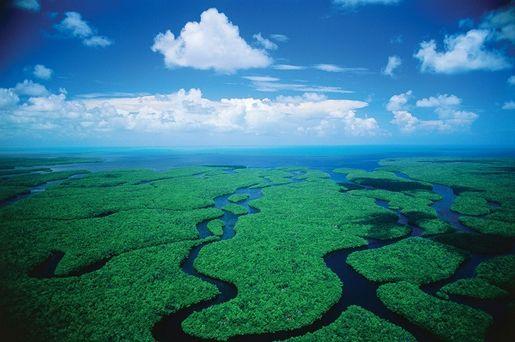 Park Narodowy Everglades na Florydzie - opinie
