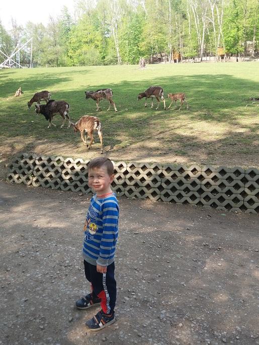 leśny park niespodzianek atrakcje dla dzieci opinie