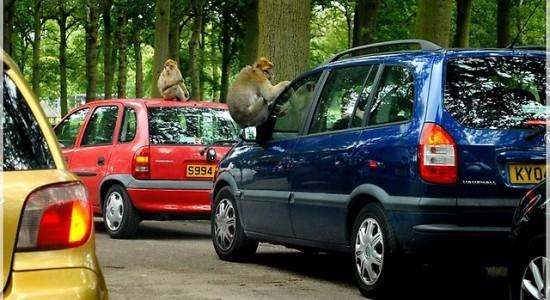 safari z dzieckiem Wielka Brytania