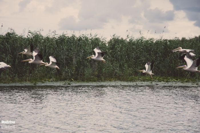 Wyprawa 5 mórz, Delta Dunaju Rumunia