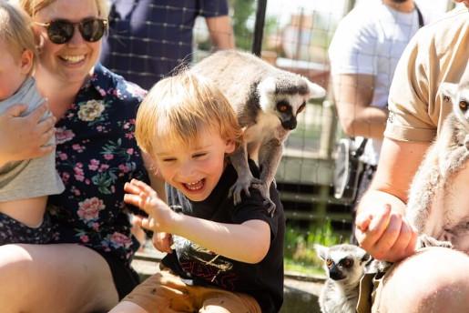Ystad najciekawsze atrakcje zoo animal park atrakcje opinie