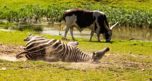 Ystad najciekawsze atrakcje zoo animal park opinie atrakcje