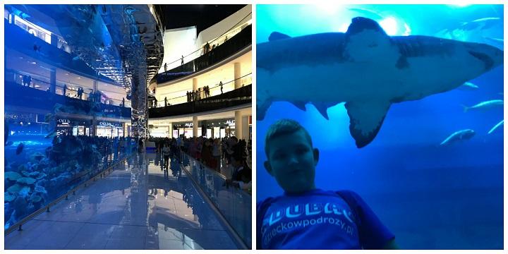 akwarium dubaj mall opinie atrakcje dla dzieci - zima ferie w Dubaju 1
