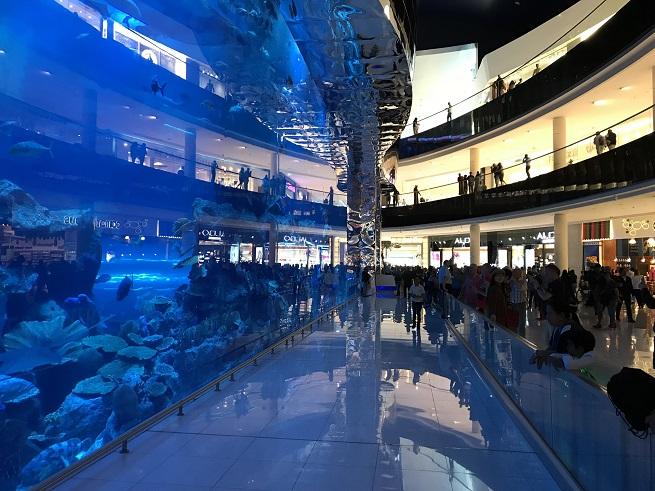 akwarium dubaj oceanarium mall dubai opinie atrakcje
