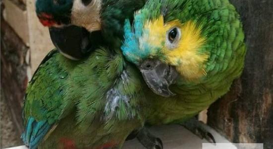 Papugarnia Reda Aqua Park ceny biletów