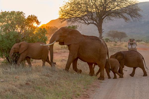 atrakcje Safari - Kenia - słonie Park Tsavo West