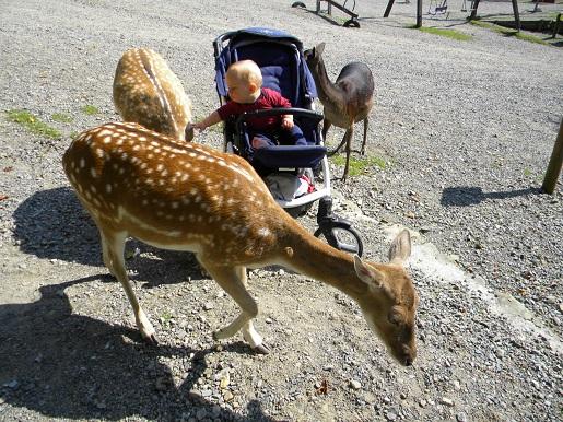 atrakcje dla dzieci śląsk gdzie na weekend z dzieckiem śląsk leśny park niespodzianek