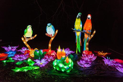 warszawa chiński festiwal światła atrakcje papugi ceny godziny termin