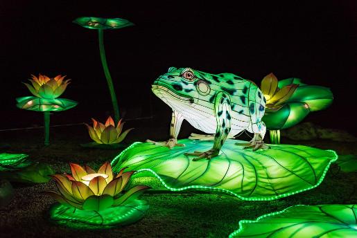chiński festiwal światła instalacje żaby