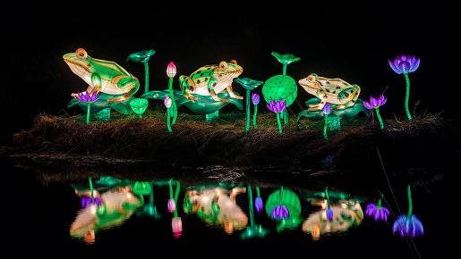 chiński festiwal światła atrakcje żaby