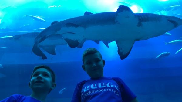 dubai mall atrakcje dla dzieci opinie oceanarium akwarium