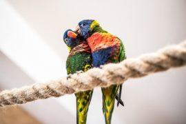 Papugarnia Egzotyczne Zakopane rodzinne atrakcje