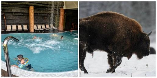 ferie zimowe w Białowieży hotel Żubrówka z dzieckiem ferie zimowe 2019 pakiety hoteli