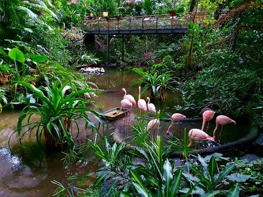 flamingi Tropikalna Wyspa opinie atrakcje ceny jedzenie