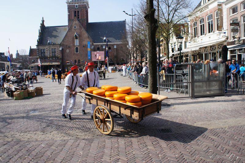 giełda serów ALKMAAR Holandia
