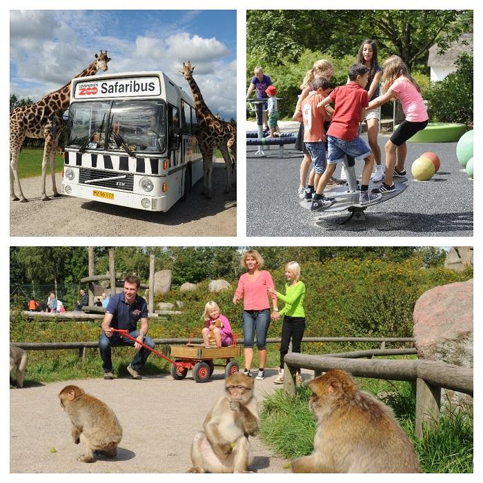 givskud zoo safari opinie legoland dania wakacje z z dzieckiem (2)