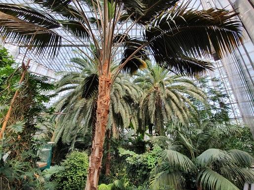 gliwice palmiarnia atrakcje dla dzieci