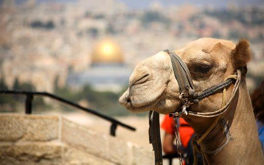 rodzinne atrakcje Izrael