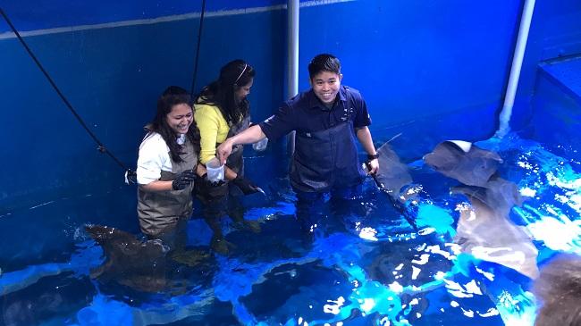karmienie płaszczek akwarium dubai mall opinie atrakcje