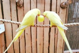 papugi jarosławiec atrakcje dla dzieci opinie