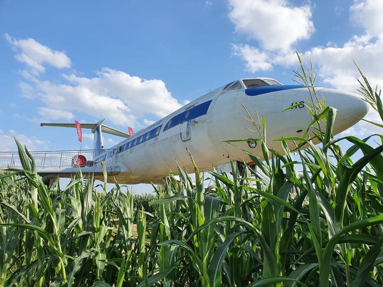 władysławowo labirynt w polu kukurydzy swarzewo opinie atrakcje