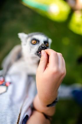 Rumia Lemur Park czy warto rodzinne atrakcje dla dzieci opinie