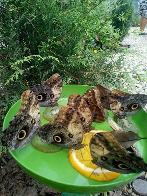 żywe motyle w Jarosławcu Kraina motyli motylarnia atrakcje dla dzieci opinie bilety