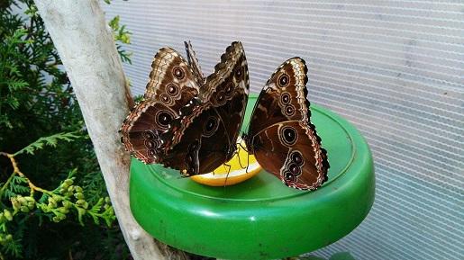 żywe motyle Jarosławiec motylarnia atrakcje dla dzieci