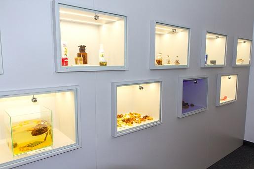 muzeum bursztynu kołobrzeg atrakcje dla dzieci rodzinne opinie 2
