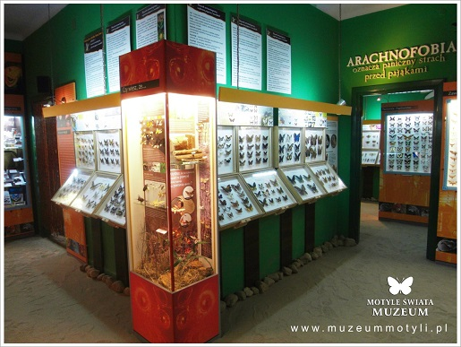 rodzinne atrakcje pmorskie muzeum motyli łeba opinie ceny