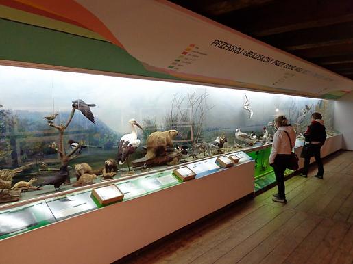 muzeum przyrodnicze kazimierz naleczow okolice atrakcje rodzinne