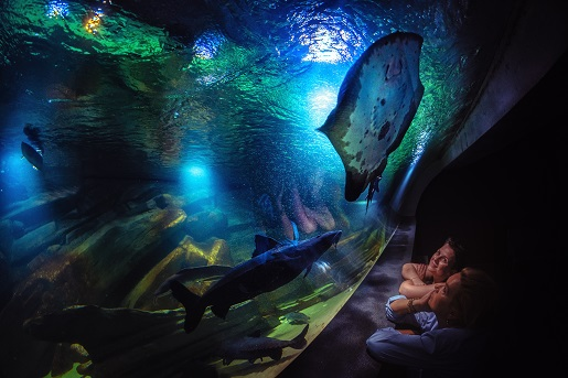 oceanarium miedzyzdroje atrakcje dla dzieci rodzinne 3