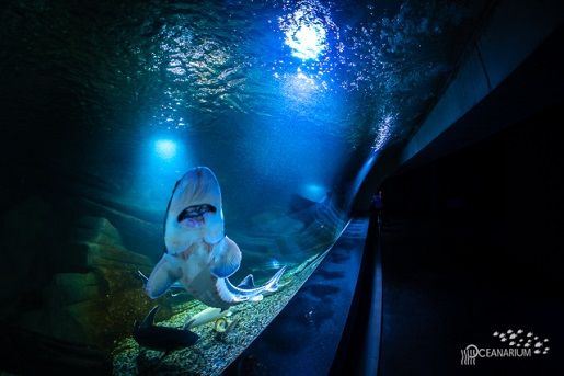 oceanarium miedzyzdroje atrakcje dla dzieci rodzinne 4