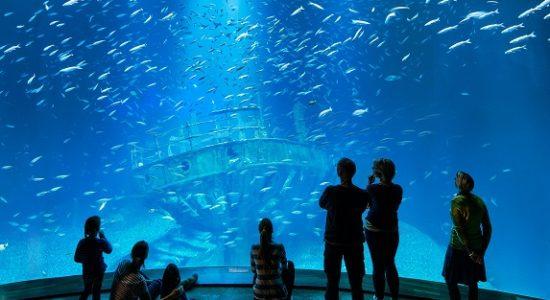 opinie atrakcje stralsund oceanarium ozeanum muzeum