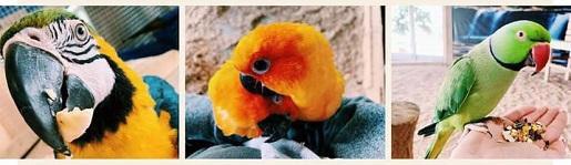 papugarnia bydgoszcz opinie godziny ceny biletów