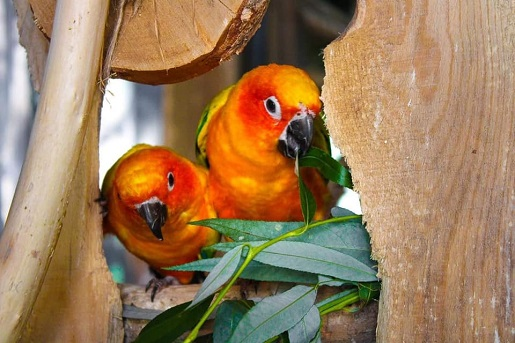 papugi papugarnia bydgoszcz atrakcje dzieci