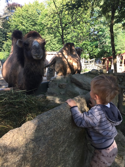Niemcy gdzie z dzieckiem rodzinne atrakcje Görlitz opinie