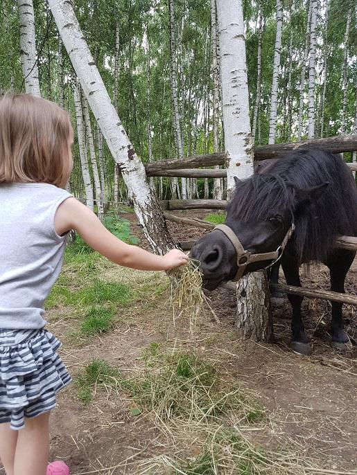 Toruń co robić z dzieckiem rodzinne atrakcje dla dzieci opinie